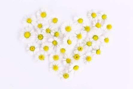 daisy-1535532__480.jpg