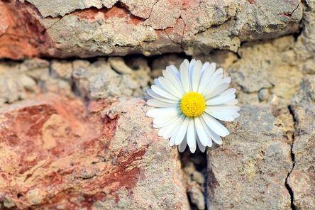 flower-2401131__480.jpg