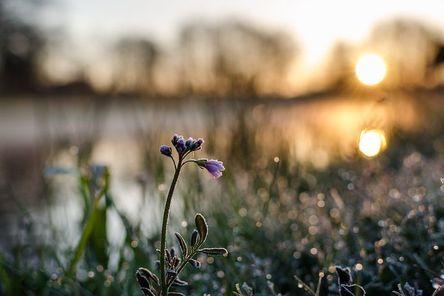 flower-2870387__480.jpg