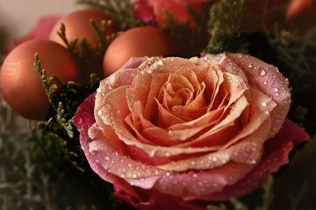flower-2886353__480.jpg