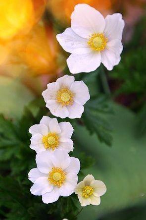 flower-3073655__480.jpg