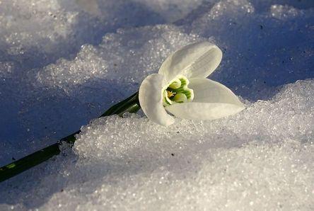 flower-3118087__480.jpg
