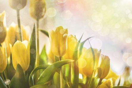flower-4155162__480.jpg