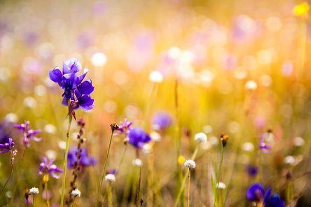 flowers-3182324__480.jpg