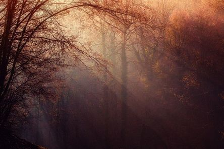 forest-1225983__480.jpg