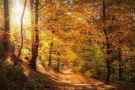 forest-2942492__480.jpg