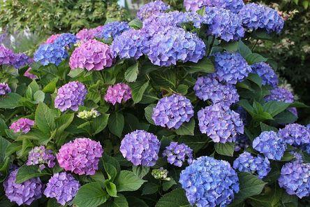 garden-4256220__480.jpg