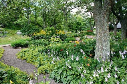 garden-56719__480.jpg