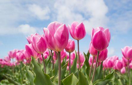 pink-2254970__480.jpg