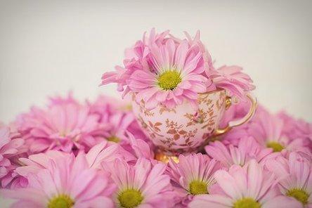 pink-daisies-2121593__340.jpg