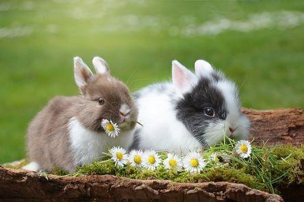 rabbit-2174679__480.jpg