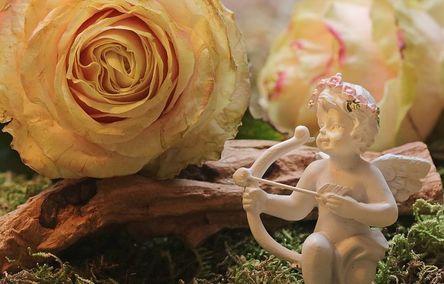rose-2042271__480.jpg