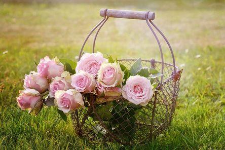 roses-1566792__480.jpg