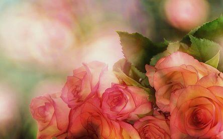 roses-3141486__480.jpg