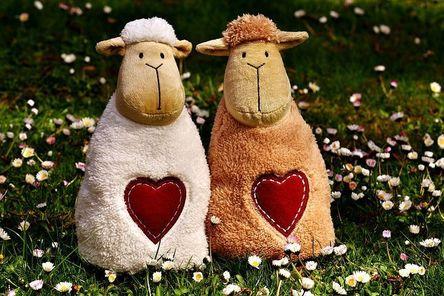 sheep-2254061__480.jpg
