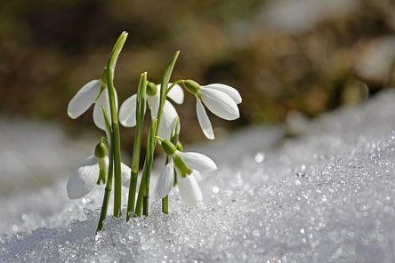 spring-1166564__480.jpg