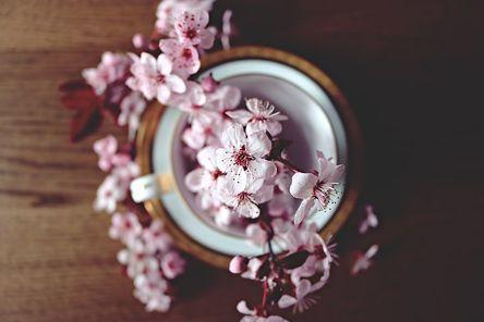 spring-2174750__480.jpg