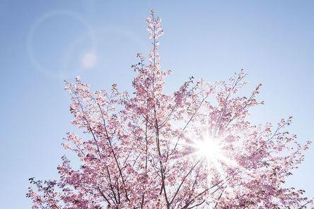 spring-733507__480.jpg