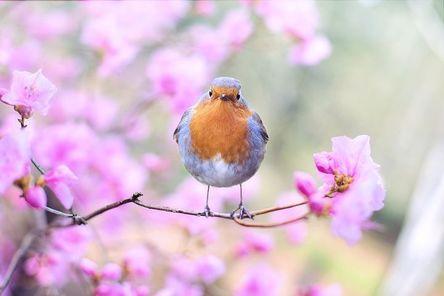 spring-bird-2295436__480.jpg