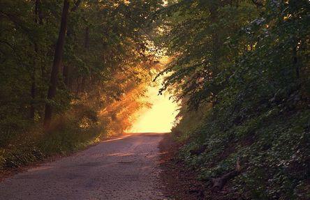 sunlight-166733__480.jpg