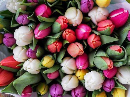 tulips-1246264__480.jpg