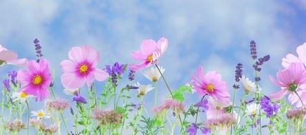 wild-flowers-571940__340.jpg