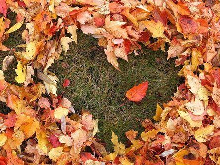 autumn-1712756__480.jpg