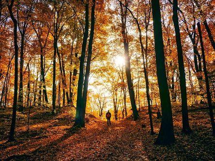 autumn-1812180__480.jpg