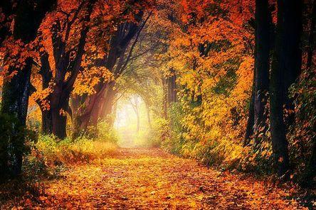 autumn-3186876__480.jpg
