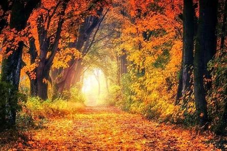 autumn-3186876__480~2.jpg