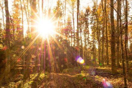 autumn-513779__480.jpg