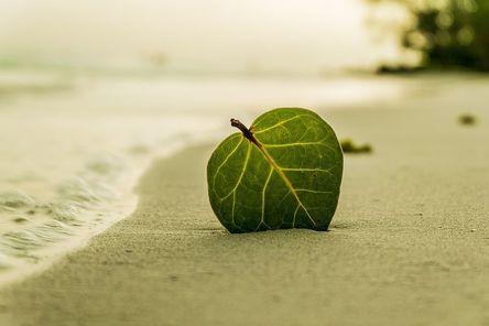 beach-394503__480.jpg