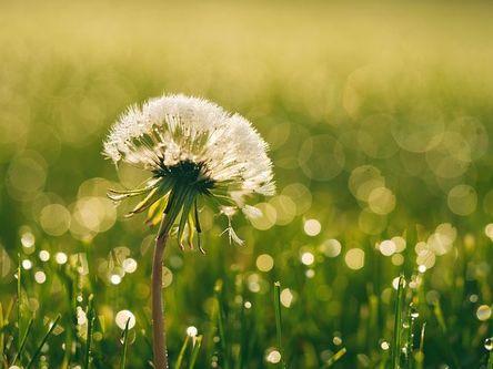 bloom-1840005__480.jpg