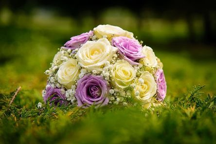 bloom-1869710__480.jpg