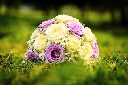bloom-1869710__480~2.jpg
