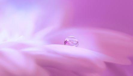 blossom-3054803__480.jpg
