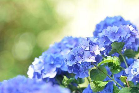 blue-3507635__480.jpg