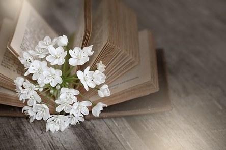 book-1356337__340.jpg