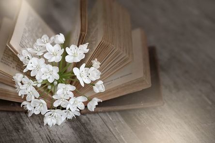 book-1356337__480.jpg