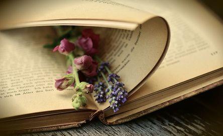 book-2363881__480.jpg