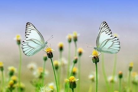 butterfly-1127666__340.jpg