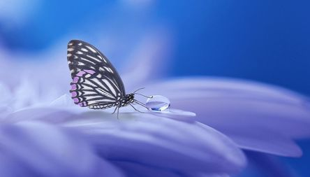 butterfly-3054736__480.jpg
