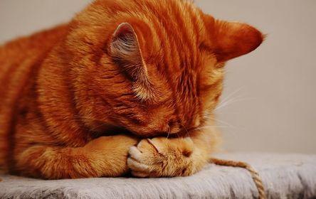 cat-1675422__480.jpg