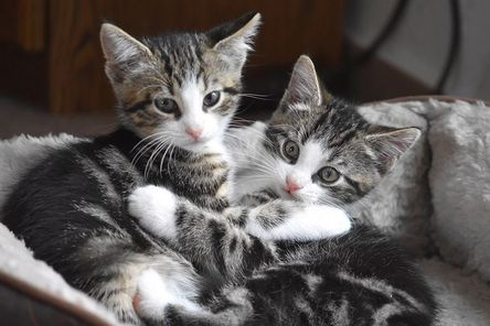 cat-4282110__480.jpg