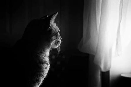 cat-659426__480~2.jpg