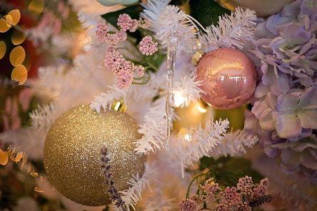 christmas-tree-3823674__480.jpg