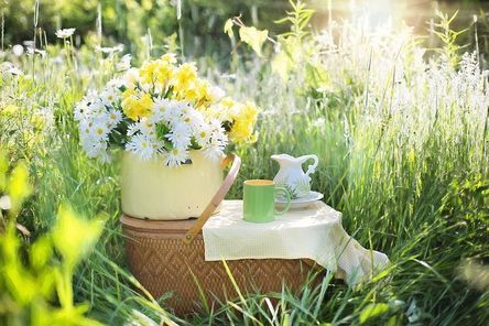 daisies-1466851__480.jpg