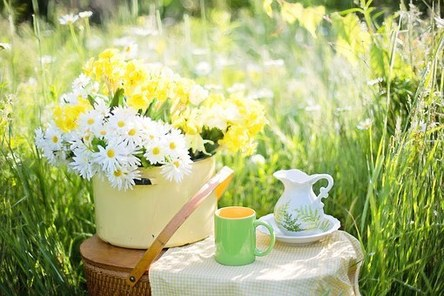 daisies-1466860__340.jpg