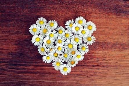 daisy-1403041__480~2.jpg