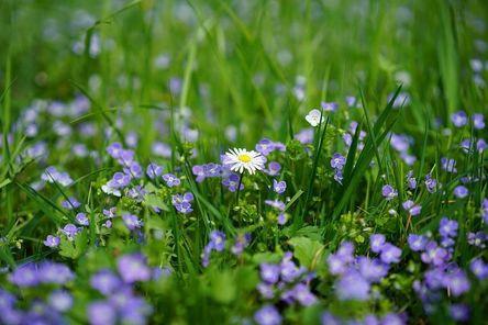 daisy-3102512__480.jpg